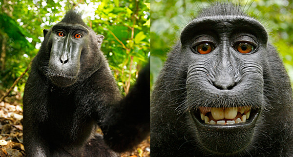 Monkey Steals Cameara and takes Pics